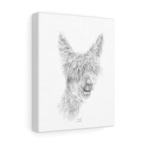 DAVID Llama - Art Canvas
