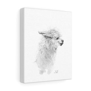 SANDY Llama - Art Canvas