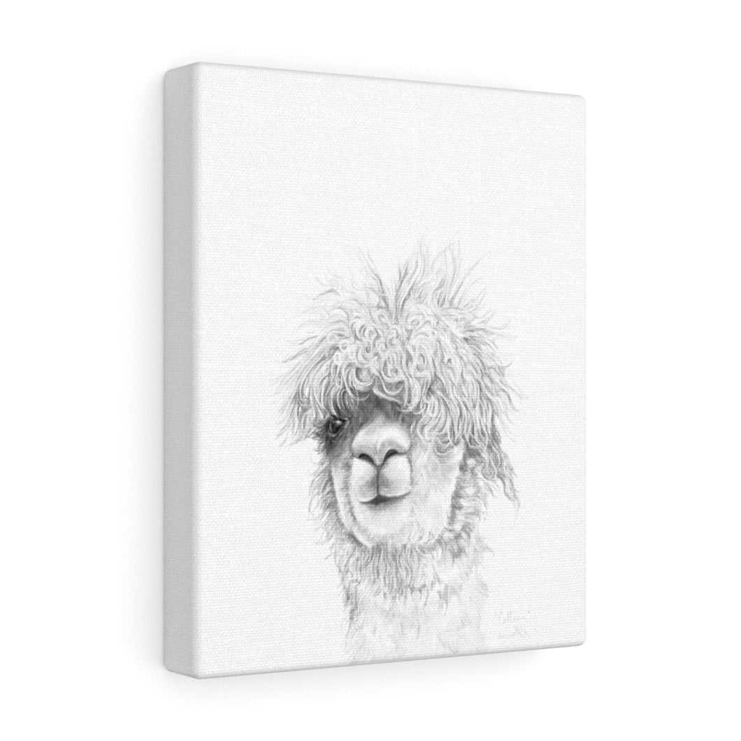 COLLEEN Llama - Art Canvas