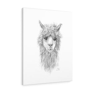 WILLOW Llama - Art Canvas