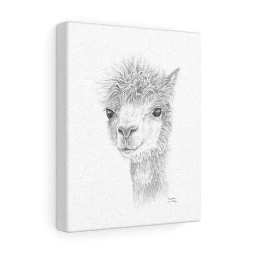 CHRISTINE Llama - Art Canvas