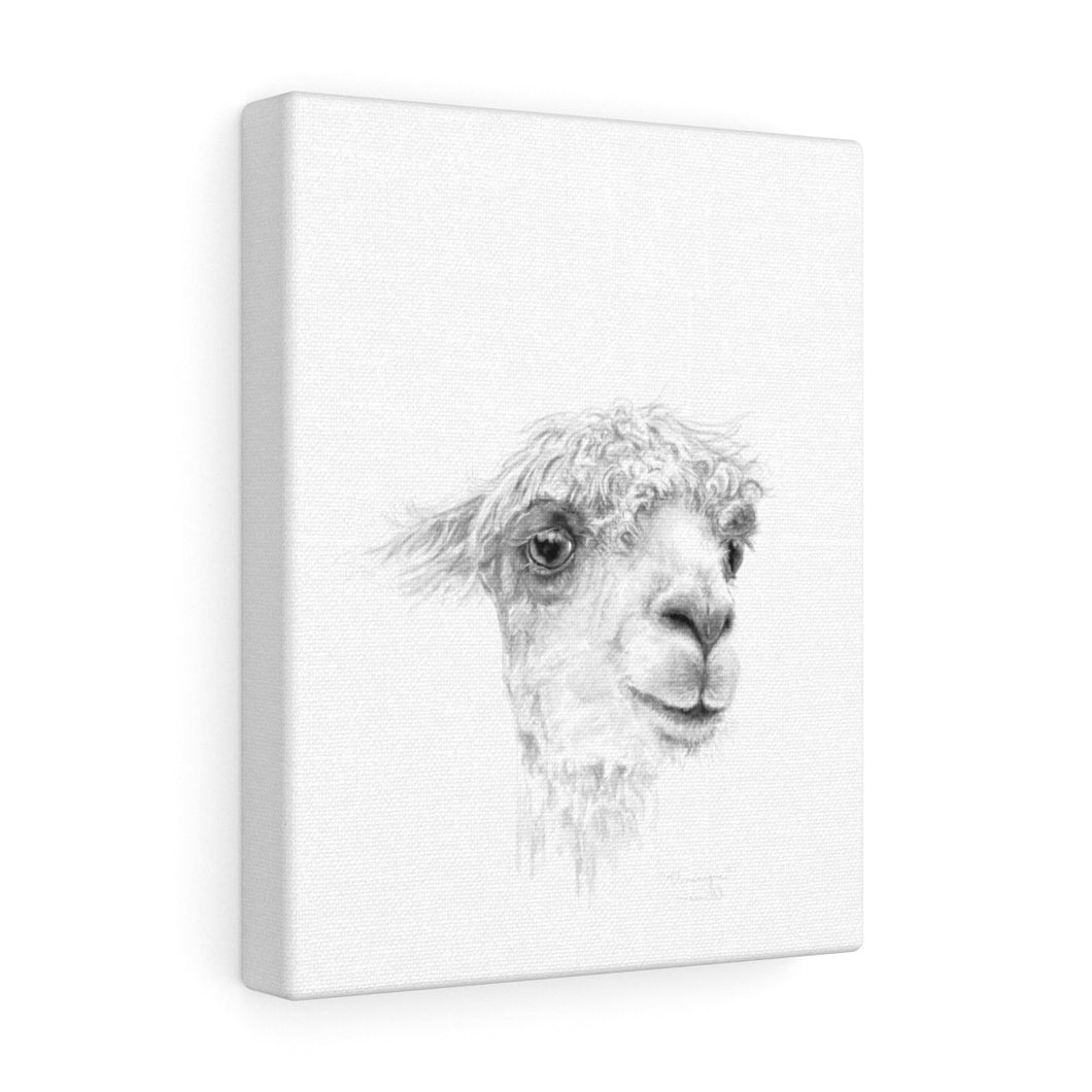 DOMINIQUE Llama - Art Canvas