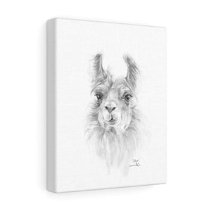 ALLYN Llama - Art Canvas