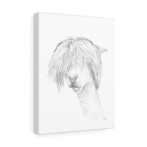 HARRISON Llama- Art Canvas