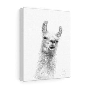 LEIGH Llama - Art Canvas