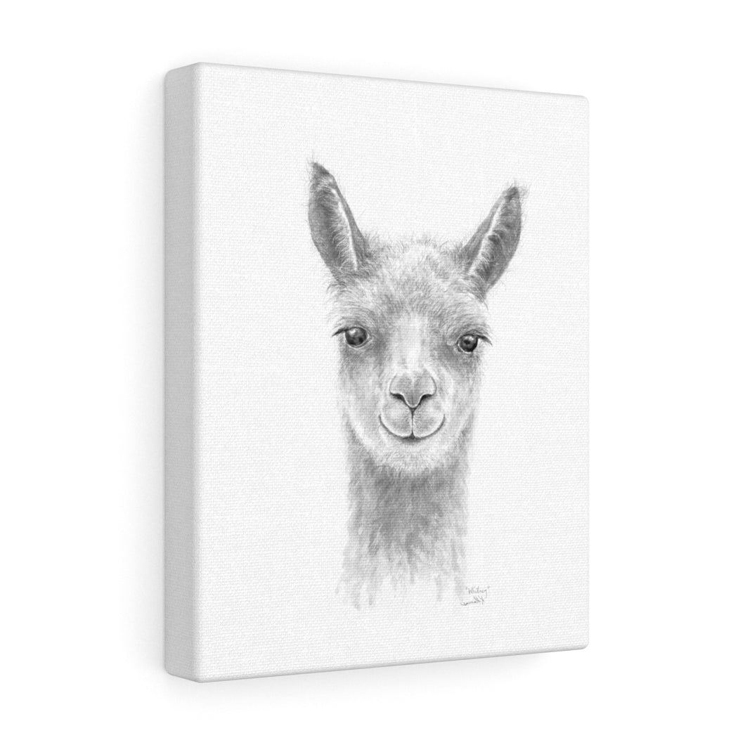 WHITNEY Llama - Art Canvas