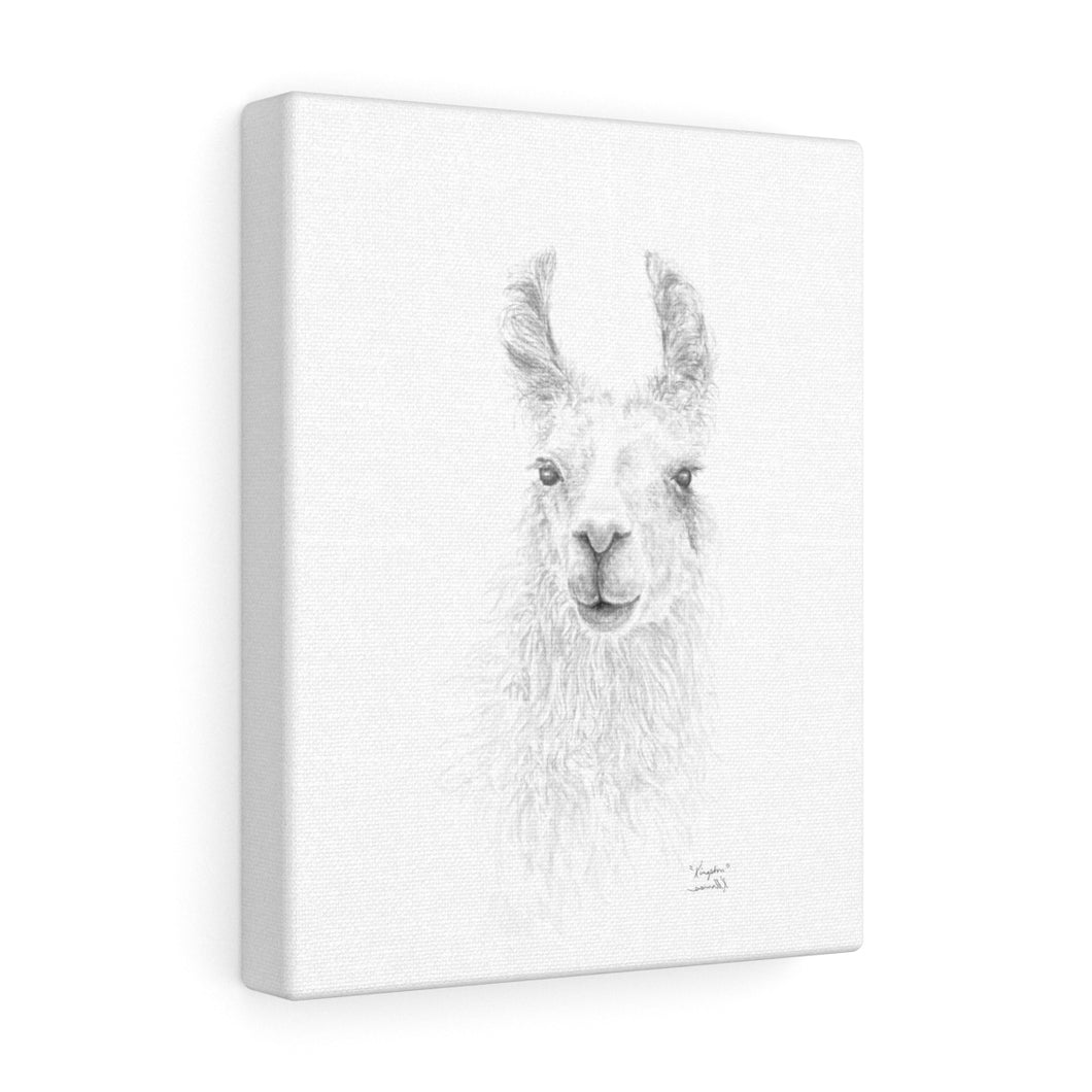 KINGSTON Llama - Art Canvas