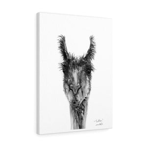 TRILLIAN Llama - Art Canvas
