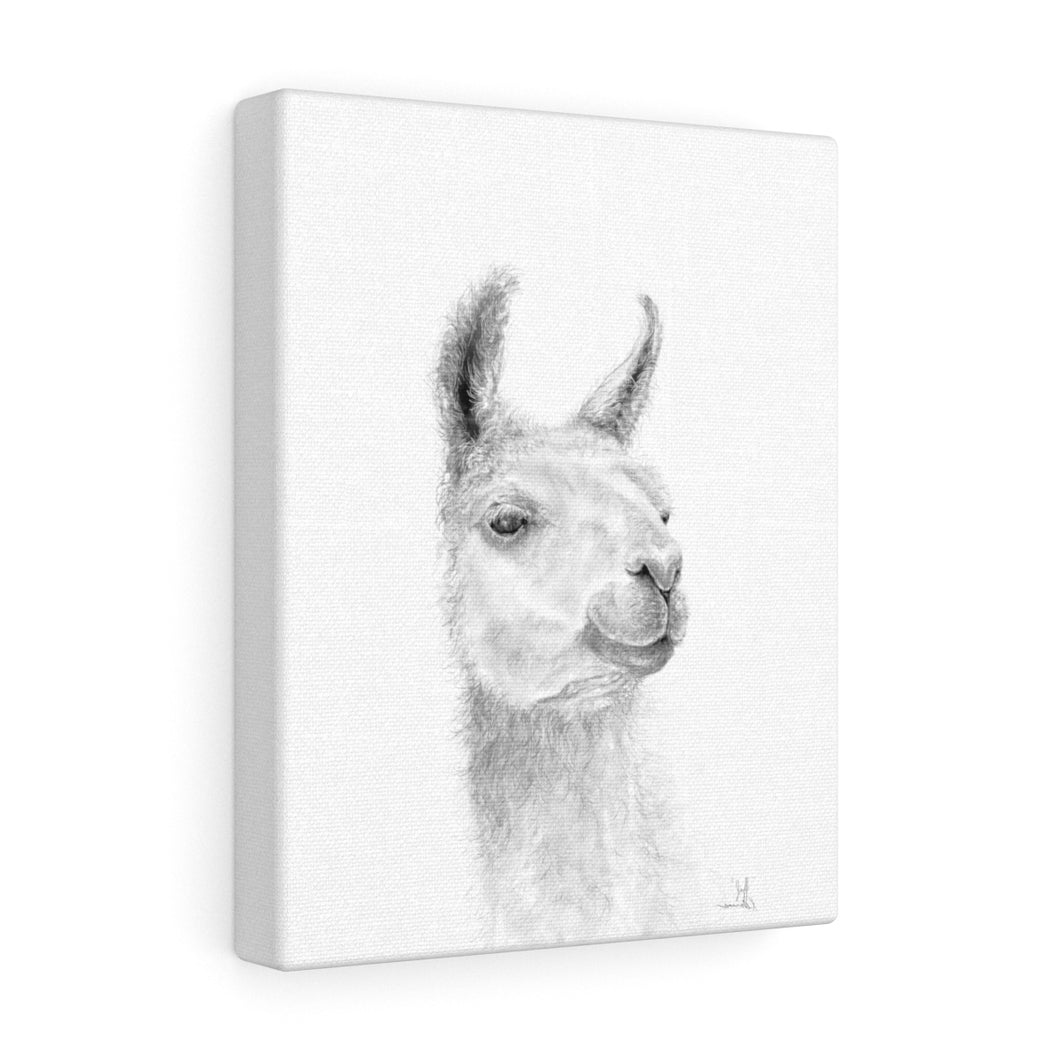 JEFF Llama - Art Canvas