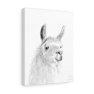 JAMES Llama - Art Canvas