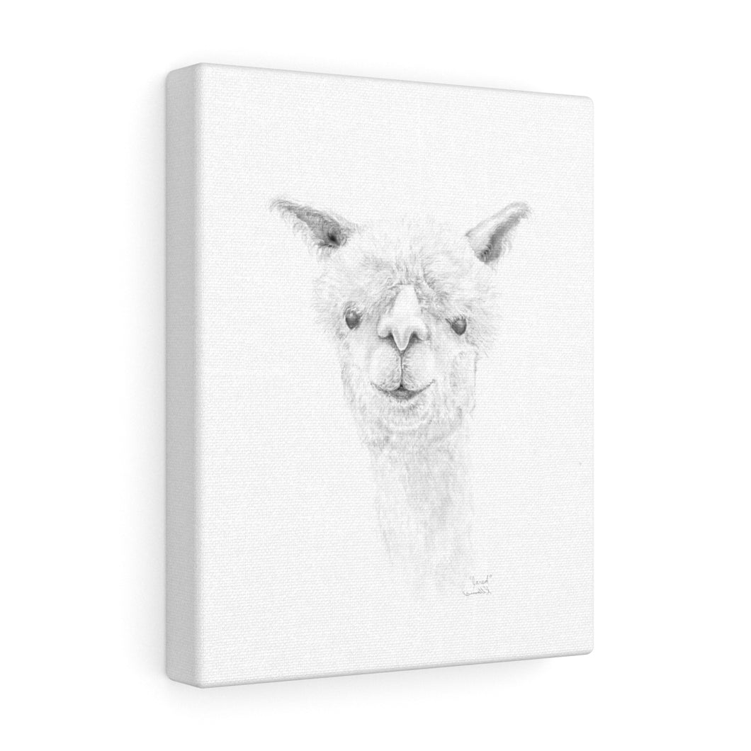 JARED Llama - Art Canvas
