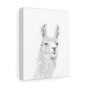 BAILEY Llama - Art Canvas