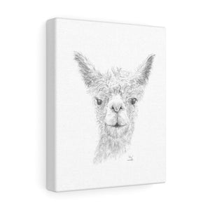 Alex Llama - Art Canvas
