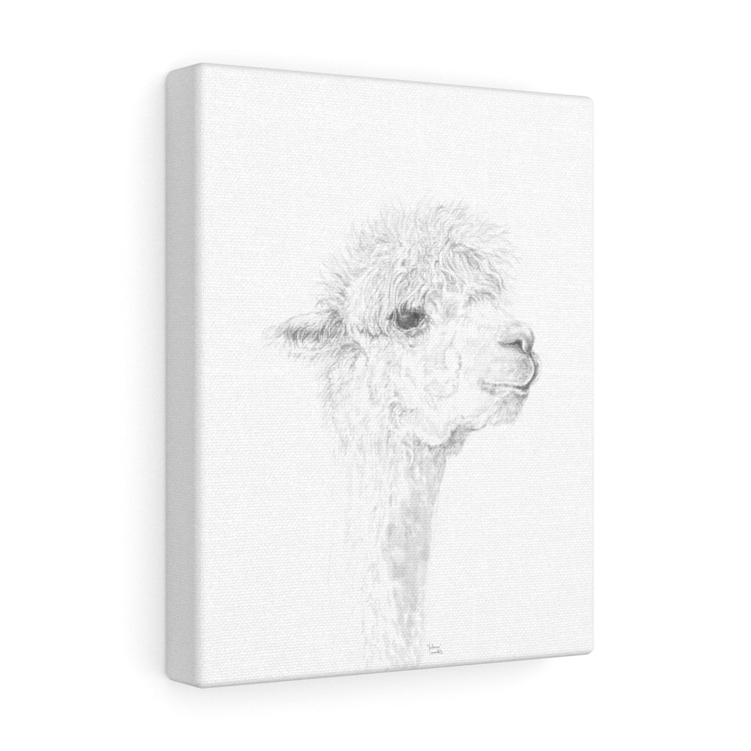 JULIANA Llama - Art Canvas