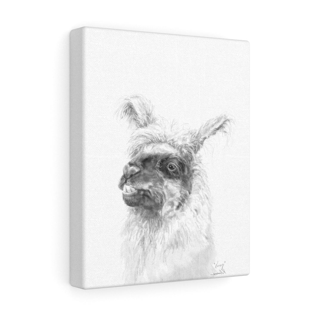 KERRY Llama - Art Canvas