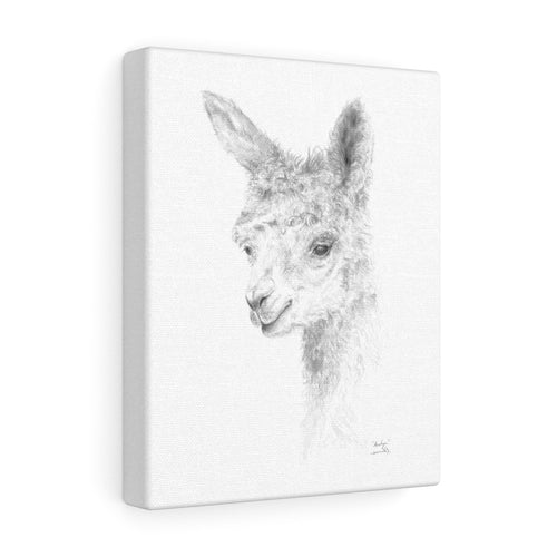 ANALYN Llama- Art Canvas
