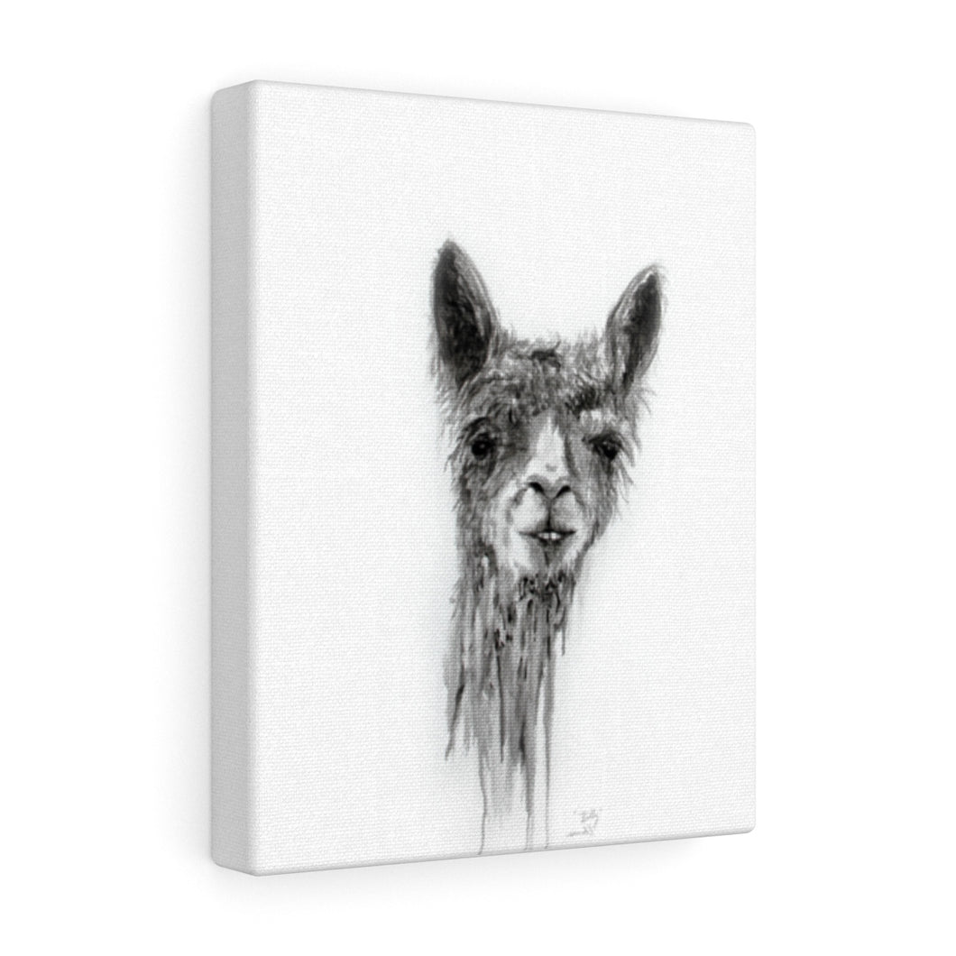 BILLY Llama - Art Canvas