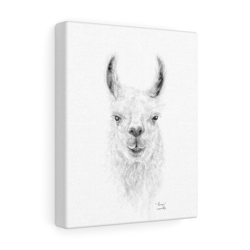THOMAS Llama - Art Canvas