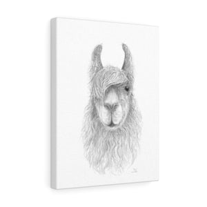 CHRIS Llama - Art Canvas