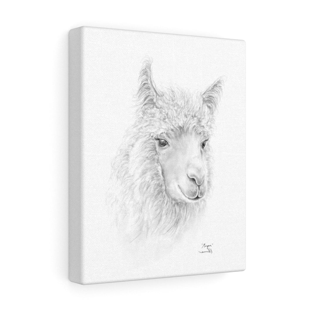 MORGAN llama- Art Canvas
