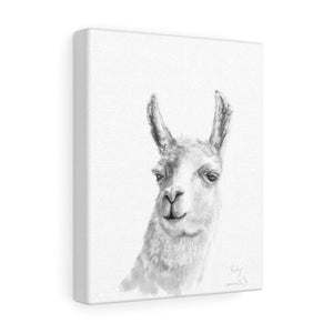 RUBY Llama - Art Canvas