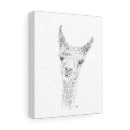 HALEY Llama - Art Canvas