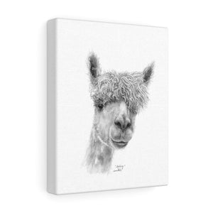 ASHLEY Llama - Art Canvas