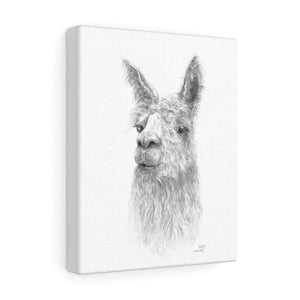 Shelly Llama- Art Canvas