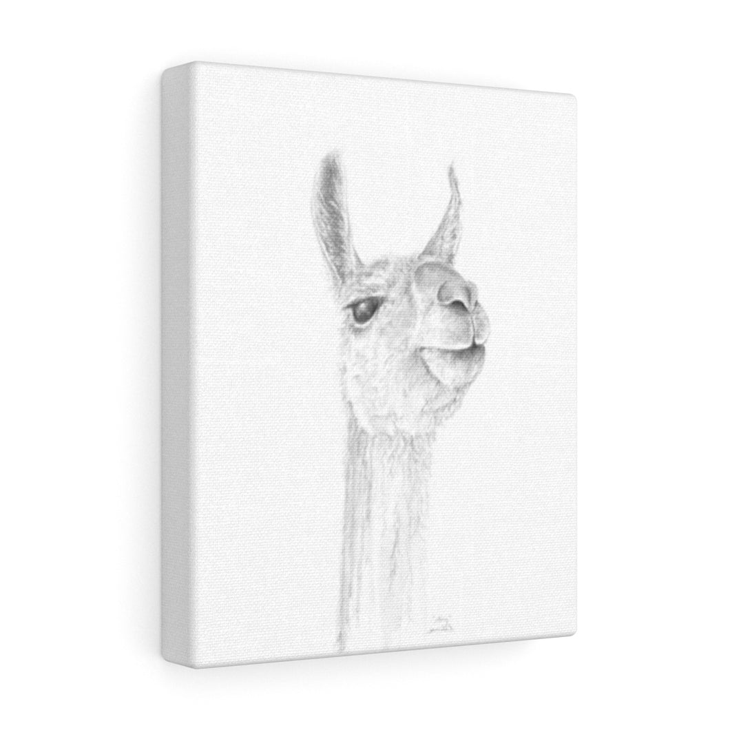 AMY Llama - Art Canvas