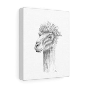 WILL Llama - Art Canvas