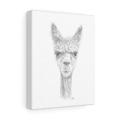 STEPHEN Llama - Art Canvas