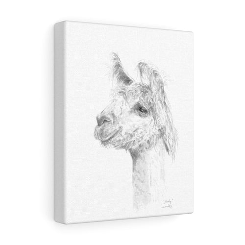 ANDY Llama - Art Canvas