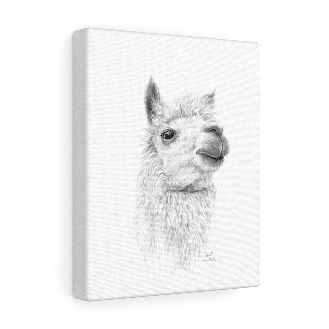 APRIL Llama - Art Canvas