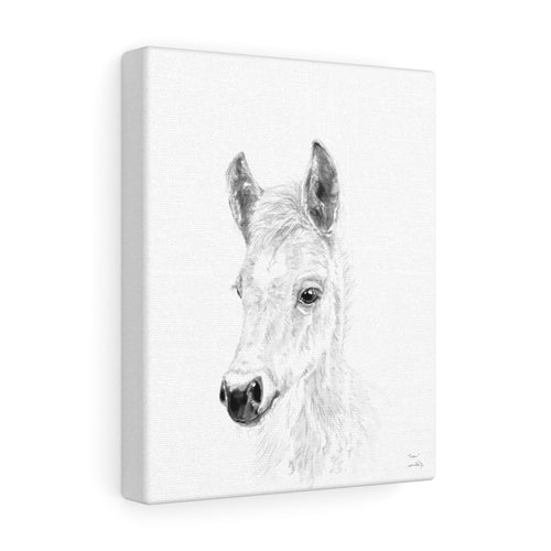 Cooper Horse - Animal Art Canvas