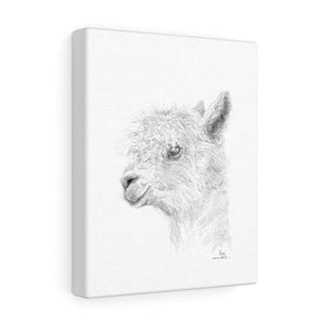 LISA Llama - Art Canvas