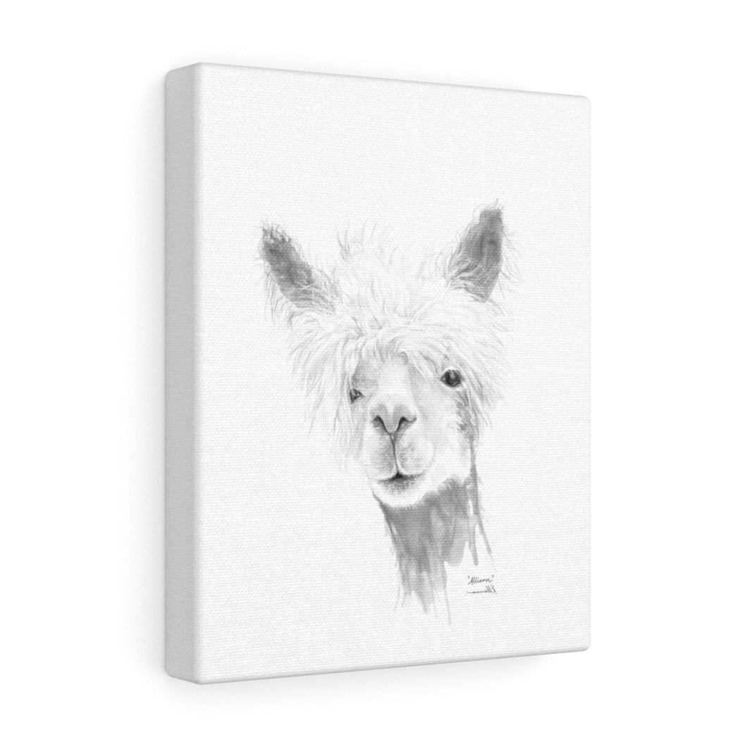 ALLISON Llama - Art Canvas