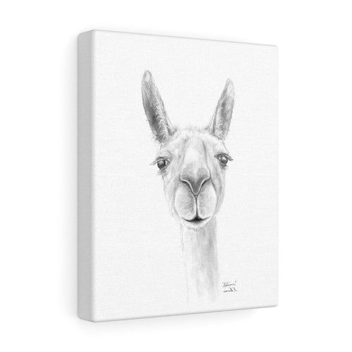 ADDISON Llama- Art Canvas