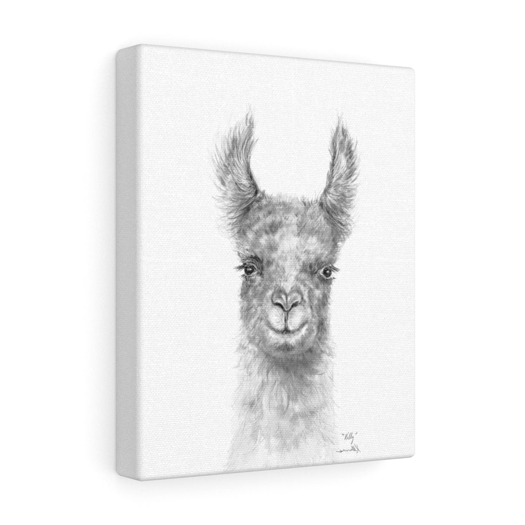 KELLY Llama - Art Canvas