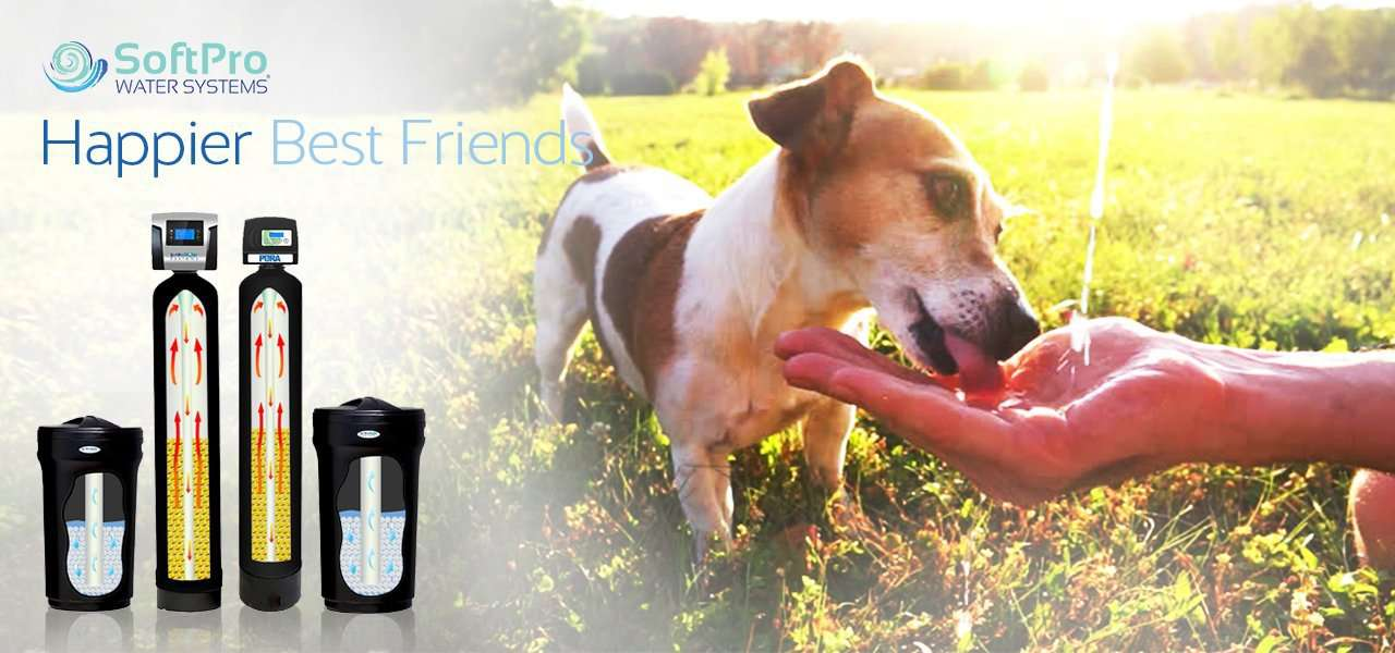 Clean Filtered Water for Pets