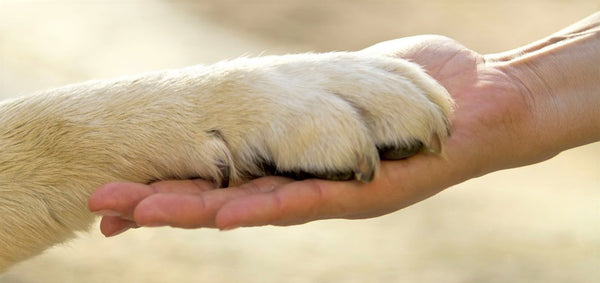 Earth Paws Pet Products How We Give Back