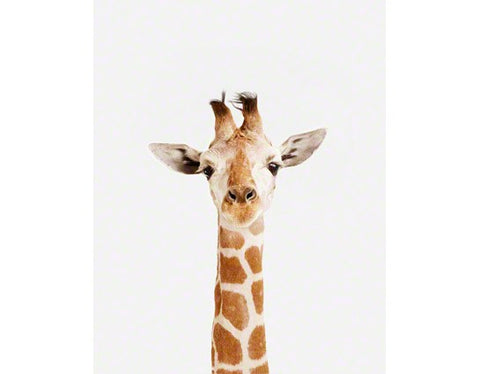 Kids wall art picturing a baby giraffe for baby nursery room decor and for toddler room ideas.