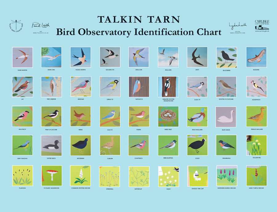 Public Art Mural Council Artist Bird Hide Observatory Identification Chart