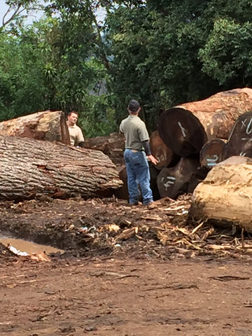 Costa Rican forestry engineers from MINAE inspecting new logs recently delivered to the mill where we buy our sustainably harvested natural live edge wood slabs.