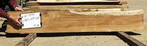 Natural Live Edge Wood Slab for Mantel, Bar Top, Bench Seat, Console Table - N18072 - Impact Imports