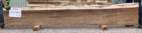 Natural live edge monkeypod or parota wood slab for a bench seat, a mantel, a bar top or a sofa table top from Impact Imports in Boise Idaho.