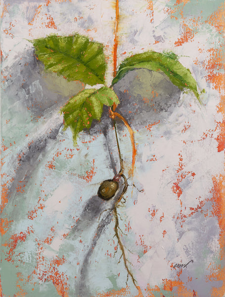 OAK SEEDLING - 12x9 inch
