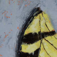 STUDY OF A TIGER SWALLOWTAIL WING - 12x9 inch