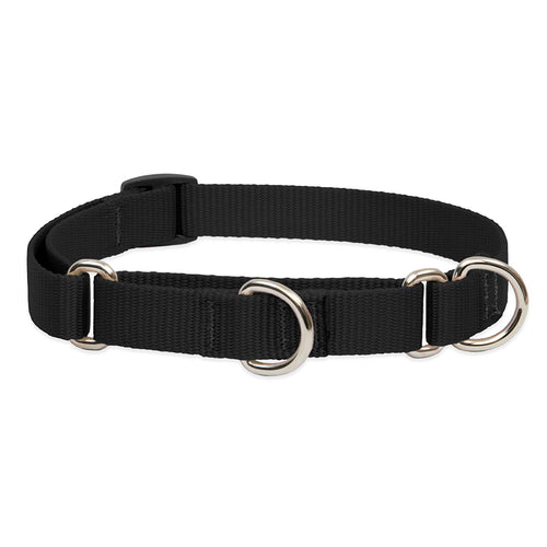 Martingale Collar | Lupine