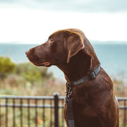 Black Waterproof Collar | Wilderdog