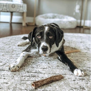 Dog with Raw Freeze-dried Moo Stick Treat Vital Essentials